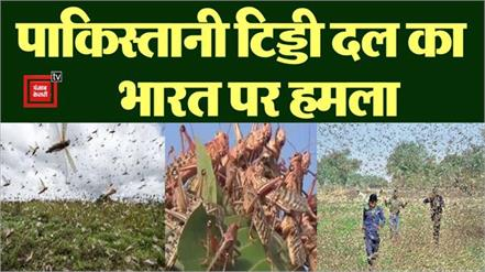 farmers of madhya pradesh troubled by locusts attack