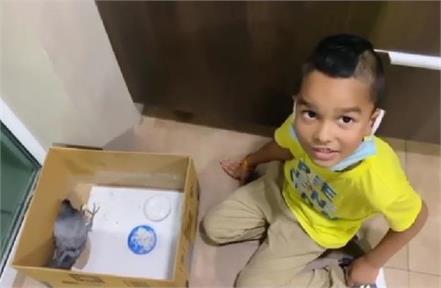 dhawan saved the life of an injured pigeon son zorawar fed food