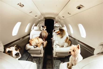 private jet book for 6 animals