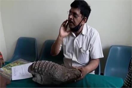 jaw of ancient elephant found in up more than 50 million years