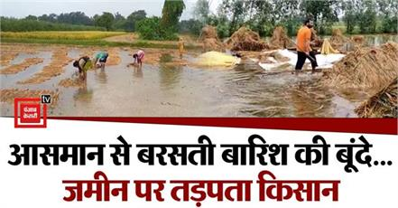 rain of disaster rain became trouble for farmers crops of potato