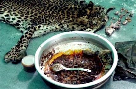 national news punjab kesari kerala idukki leopard