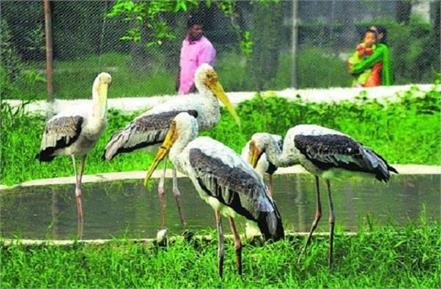 news for chhatbir zoo