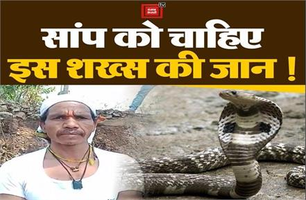 snake became enemy of man s life in betul