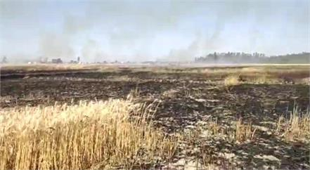 about 8 acres of crop ashes due to fire