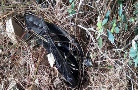 one dozen crows found dead in shilai