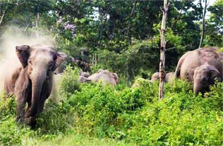 two people including woman killed in attack by wild elephants