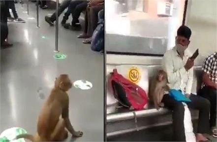 monkey in delhi metro