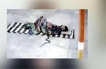 national news punjab kesari rajasthan mahadev temple social media cobra snake