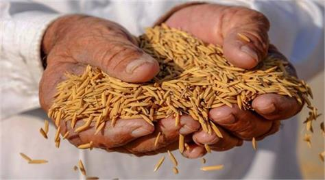 experts wary as punjab cm urges pm to raise paddy msp