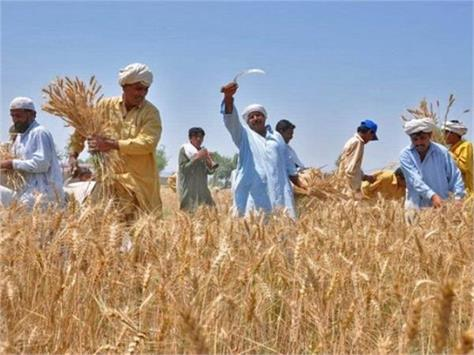 farmers will not incur losses government will give incentive with msp