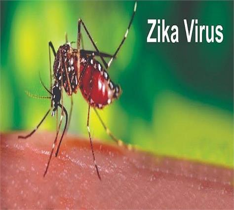 zika virus in punjab