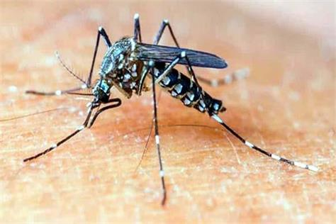 dengue was reached bilaspur from bengaluru figures will be surprised