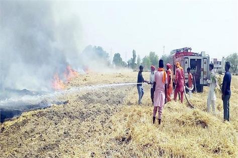 fire in wheat crops