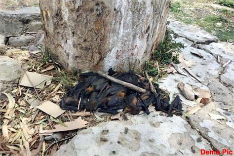 dead bats found in school of una