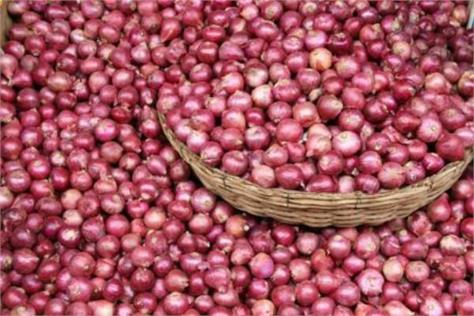 due to heavy in onion prices farmers worry