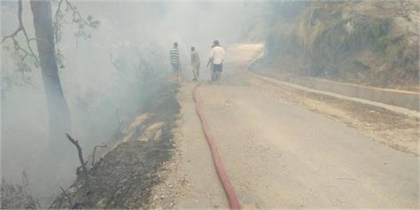 fire in the forest of akhnoor tehsil