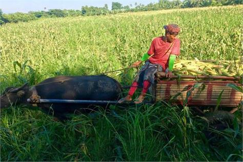 government can double the income of such farmers