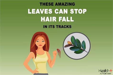 these amazing leaves can stop hair fall in its tracks