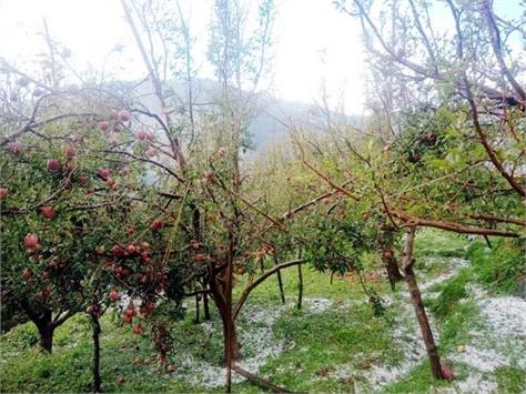 loss of apple crop from hail storm