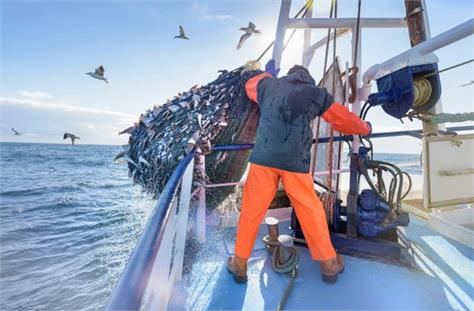fisheries sector can raise 9 billion investment in five years officials