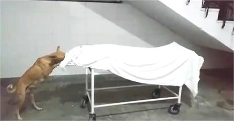 video viral who shows the body of the hospital the dog
