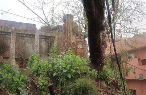 trees fell in light rain big accident averted