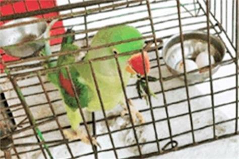 a female parrot kept 3 eggs for 6 years