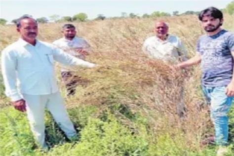 heavy rains and hailstorm caused heavy damage to crops