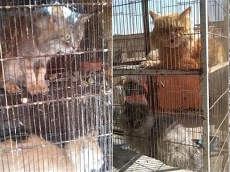 corona lockdown caged dogs cats and rabbits found dead in pakistan pet houses