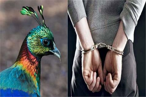 one arrested with monal s crest and 2 live cartridges