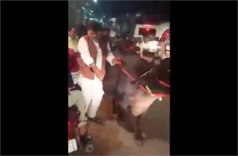 video of mp s energy minister moving buffalo goes viral