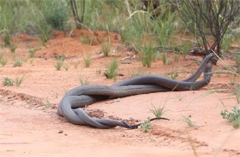 international news punjab kesari social media snakes
