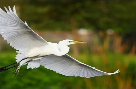 international wetland day migratory bird becomes center of attraction