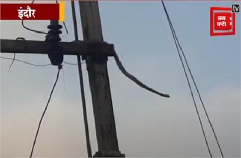 10 feet long snake climbed in transformer